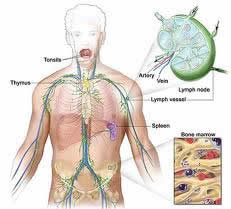 Lymphoma Treatment in India